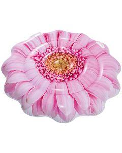 Pink Daisy fllower